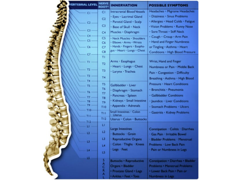 Nerve Chart Chiropractic